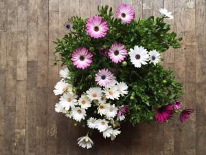regalos de primavera