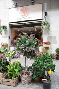 Polygala en floristeria en Sabadell