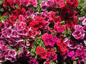 plantas para terrazas