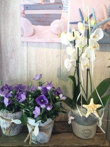 floristeria verano