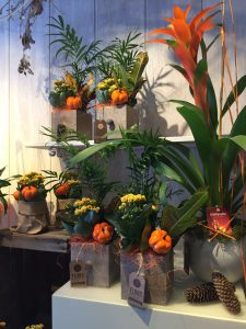 decoracion plantas de otoño