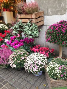 Bolas de Crisantemo