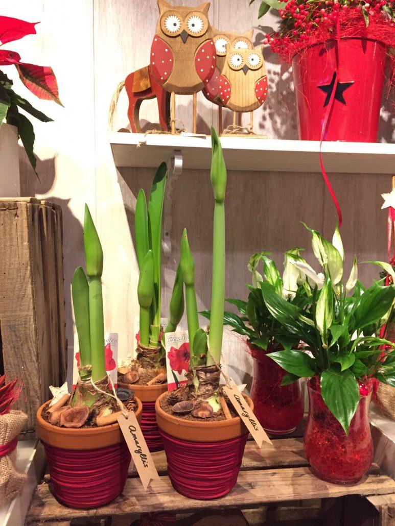 plantas en navidad