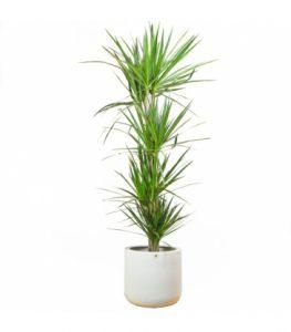 plantas de primavera