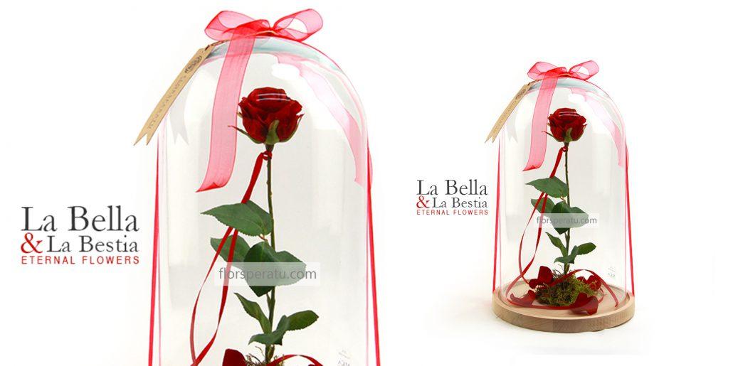 Rosa Bella Y Bestia