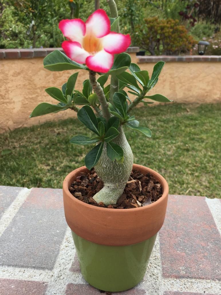 arboles en miniatura