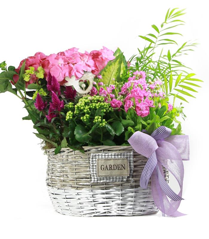 plantas a domicilio