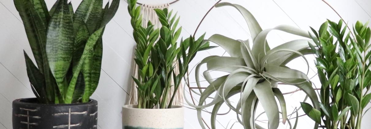 plantas para nacimientos